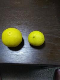 木の実は何でしょうか 枝にとげがあります。 レモンの木のトゲのようなです。 よろしくお願いします。