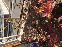 ブルーベリーの木です。とび出てる枝は剪定した方がよいでしょうか?