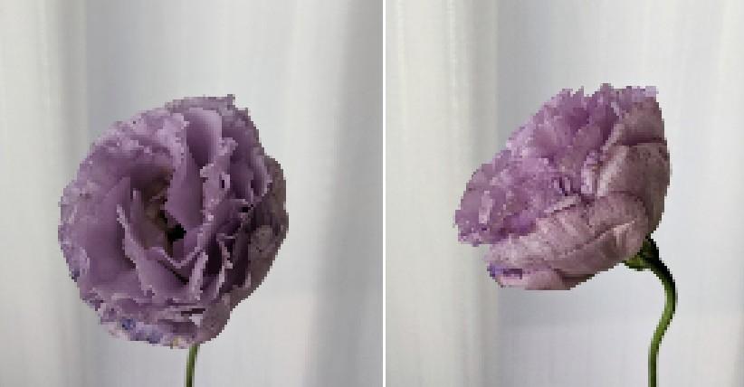 このお花の名前を分かる方いらっしゃいますか?