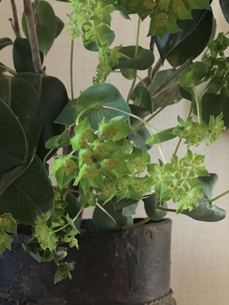 この花(葉っぱ)の名前は何でしょうか?