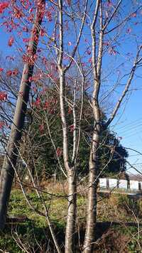 樹木名を知りたいです。 樹高4mくらい 花は咲かなかったと思います。 お願いします。
