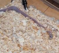 蛇・ヘビの種類を教えていただけませんか。