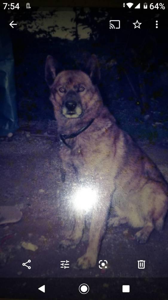 以前飼っていた犬について、 こちらの犬は甲斐犬でしょうか? 琉球犬でしょうか? 狼爪が6本ありまして、性格などは飼い主家族以外には好戦的で唸ったりもしていました。既に亡くなってまして15年前くらいの話です。その頃に琉球犬と言う犬種を知らなかっただけで詳しくどちらか分かりません。わかる方居たら教えてください。