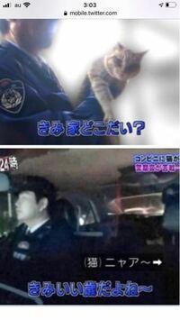 警察24時にいた猫ちゃん、君いい歳だよねって 年齢分かるんですか?