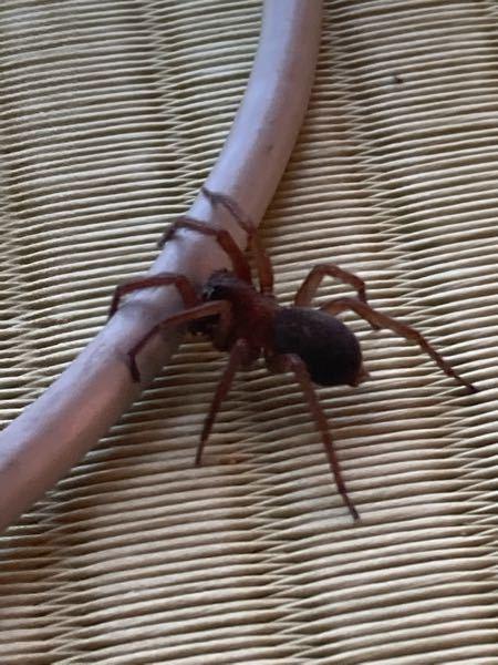 この蜘蛛の名前を教えてください。