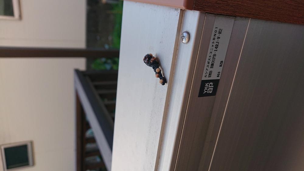 これは何の糞でしょうか? 門柱の上にありました。 鳥ではなさそうなので気持ち悪いです。 防除方法もわかれば教えて欲しいです(≧□≦)