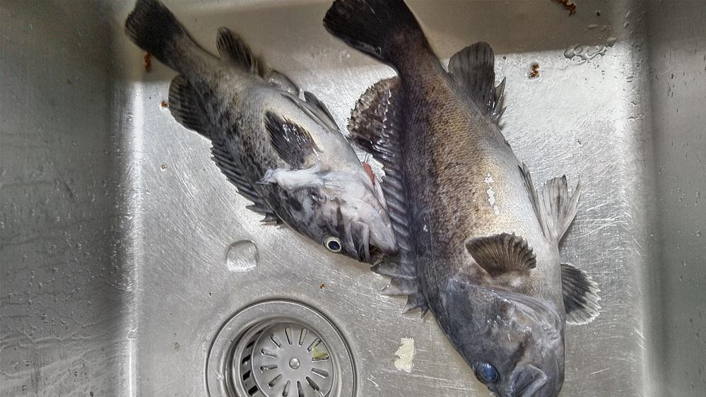 この魚の名前を教えていただけますか?