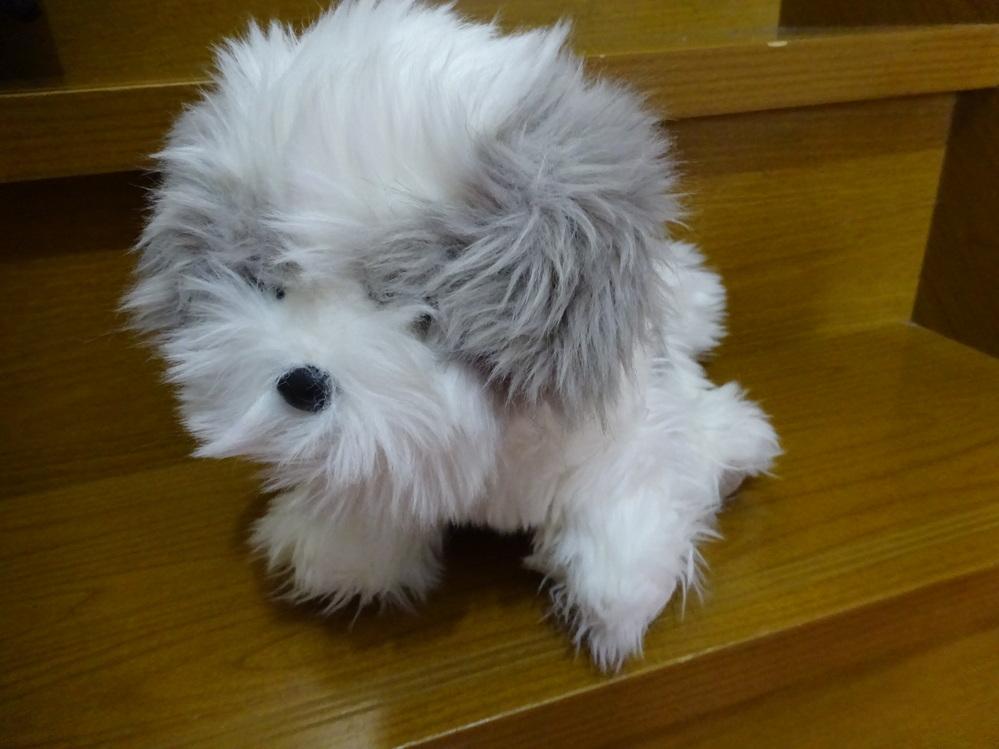 この犬のぬいぐるみ、なんという犬の名前(種類)でしょうか? 教えて頂ければ助かります。 500枚差し上げます。