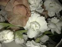 なんて言う名前のお花ですか?!教えてください!