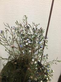何と言う花でしょうか? かすみ草のような小さい花で カラカラでドライフラワーみたいになってるんですが、 枯れているのか 水が必要なのかわかりません。 買ってからひと月経っています…。