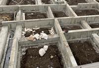 建築中の隣の家が、写真の状態でコンクリートを養生している。 とのことで言い張っています。 土が剥き出しの状態で、立ち上がりのみコンクリートを敷設し、養生させることは考えられますか?