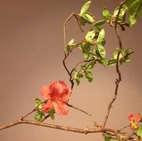 この花は何という花ですか? とても奥深い美しさで 気になっています