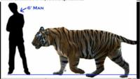 最大級個体のベンガルタイガーに勝てるインドの陸棲動物には何がいますか?
