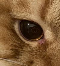 猫の目に気泡のようなものができていました。病院に連れていくべきでしょうか? この症状の原因がわかれば教えていただきたいです。