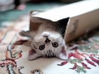狭いところに入り込みたいネコちゃんの心理を教えてください♪