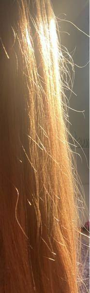 髪の毛が痛みすぎてアホ毛飛びまくってるんですけど これってもうどうしようもないですかね、、