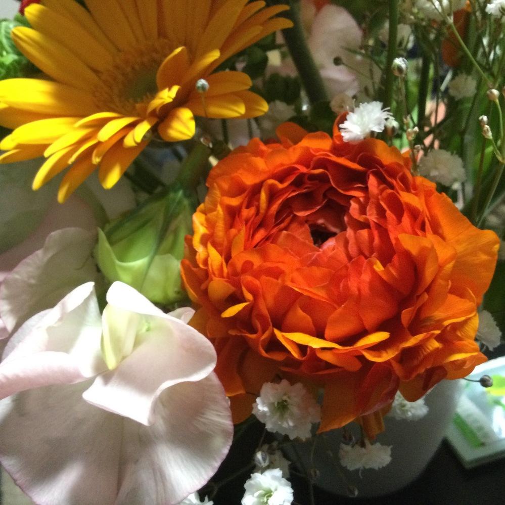 花の名前と花言葉教えてください