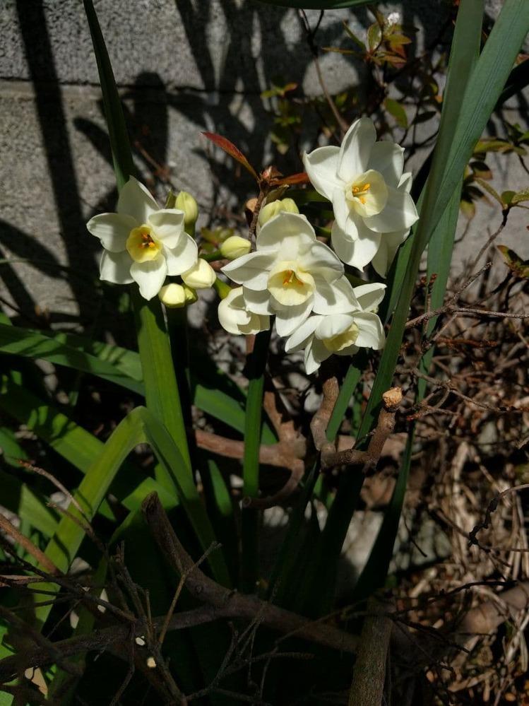 この花の名前を教えて下さい。よろしくお願いいたします。