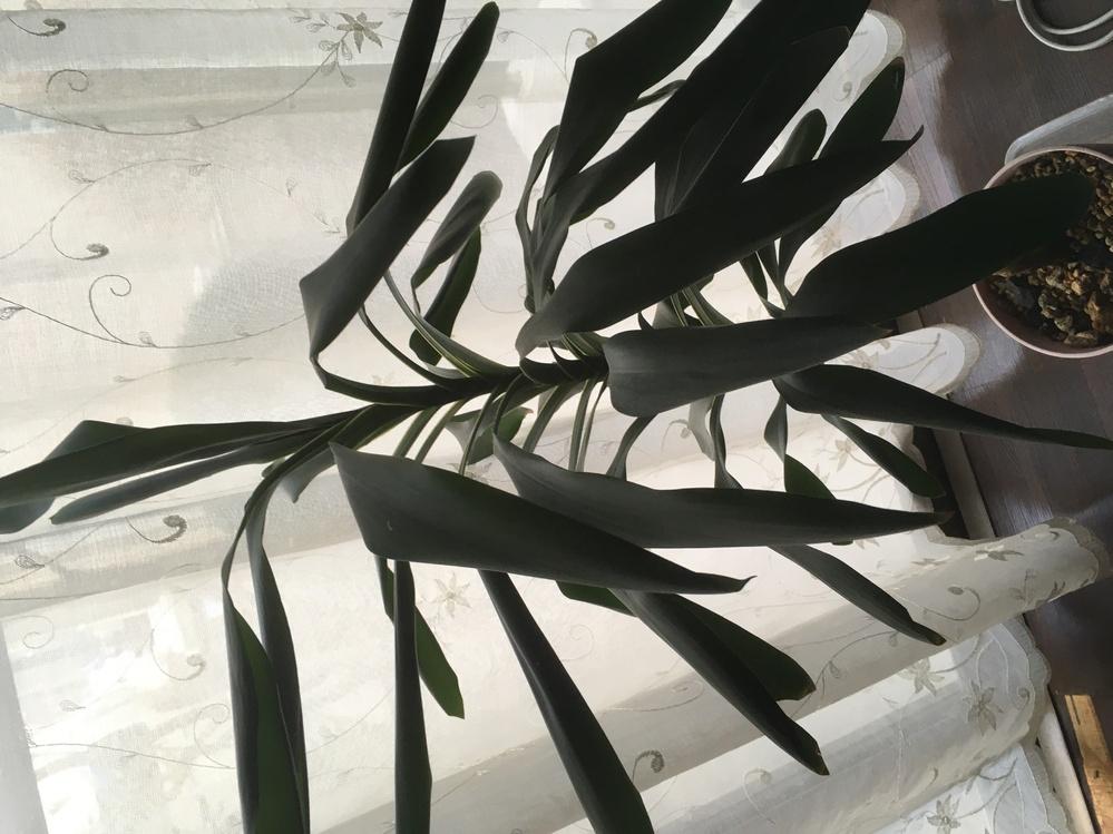 【観葉植物】 この植物の名前を教えてください!