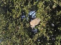 鳥の名前を教えてください。  鳥が家に迷い込んできました。  大きいフクロウくらいの大きさがあり、嘴がわりと長いです。 なんという鳥がわかる方、教えてください!