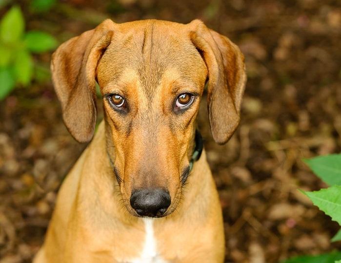 この犬の気持ちを教えて下さい。
