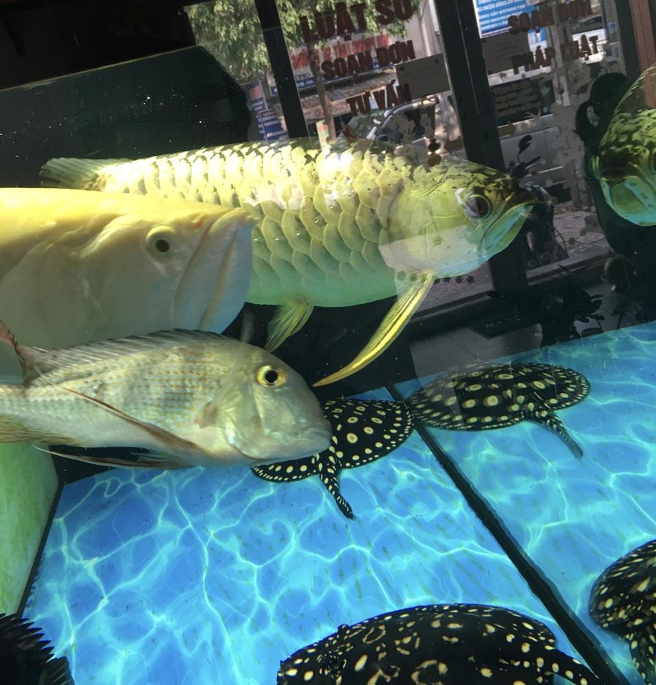 手前の魚はティラピアですか。