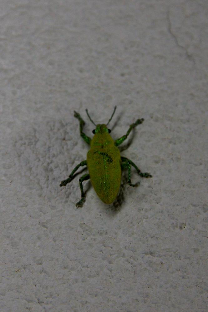 写真の虫の種類は何ですか?