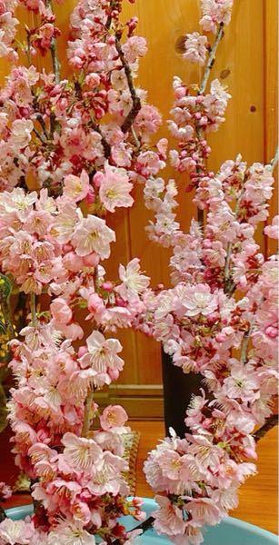 これはなんという桜ですか? よろしくお願いします。