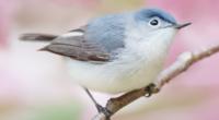 野鳥の名前が知りたいです。 添付した画像の、野鳥の名前が知りたいです。ゴジュウカラかな?ともおもったのですが、ちょっと違うような・・・お知恵をお貸しださいませ!