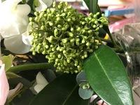 この植物の名前わかる方いらっしゃいますか??