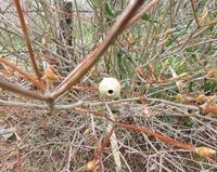 この巣の持ち主を教えて下さい。 3月17日福岡県で見ました。