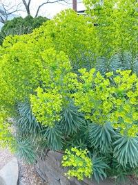 これなんの植物ですか?