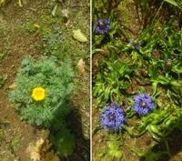 花の名前を教えて下さい 写真の2つの花の名前ですが画像検索しても似たような花があるので区別ができません。わかる方教えください・