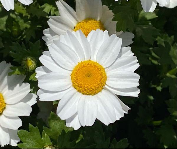 下の写真は何という花でしょうか?