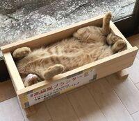 木材にお詳しい方へお伺いをいたします。 ・ 猫用のベッドを作りたいと考えているのですが、ヒノキは価格が高いので安い木材を使って作ってみたいと思っています。 ・ 例えば合板(ベニヤ)とか・・・。 ・ 合板以外で価格が安めの木材があれば、木材の名称を教えていただければと思います。 ・ 木材は猫用のベッドなので、少しだけ調達できればよいです。