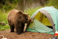 山で料理したら匂いに釣られて熊が出てくることってあるでしょうか?