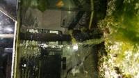 メダカの水槽に藻が発生していますが、掃除をしてもなかなか居なくなりません。なにかよい方法はありますか? とりあえず貝は居るのでガラス面はきれいに掃除してくれています。