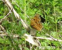蝶の名前を教えてください、 岐阜県美濃加茂市で、 撮影20210329
