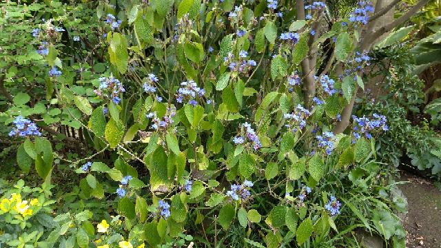 ある人の庭に咲いていたこの花の名前を教えてください