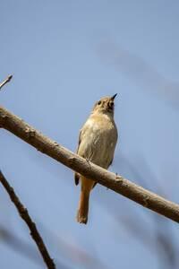この野鳥の名前を教えてください