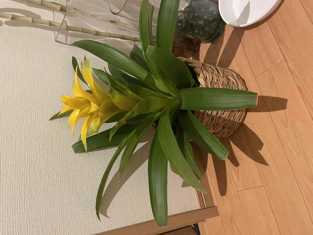 この植物の名前教えてください!!