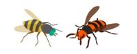 《慣用句シリーズ》 「虻蜂取らず」 と言いますが、取ってどうするんですか? アブとハチの両方を同時に、もしくは連続して捕獲しなければならないシチュエーションなんて、あるんですか? ㅤ ㅤ