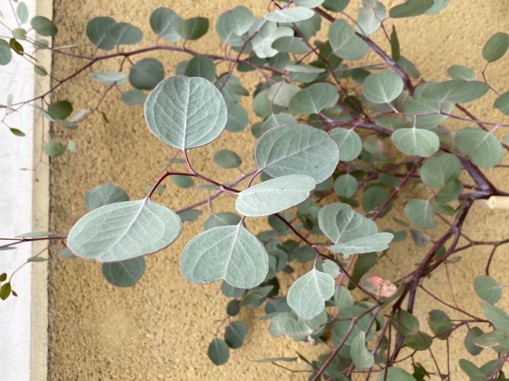 この植物の名前はなんですか?