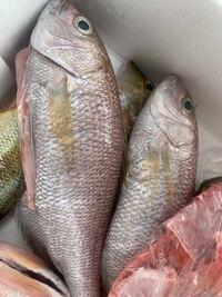 なんという魚ですか? 頂きもので、食べ方がわかりません。