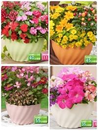 写真のようなカラフルのプランター(8号サイズ)を販売しているところを探しています。 お花と一緒にの販売ならあるのですが、プランターのみの販売は、ネットにも近くのホームセンターにも売っていません。もしご存知の方がおられましたら教えてください。よろしくお願いします。