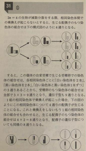 2n=4の生物の減数分裂についての解説で疑問があります。 上の図の乗り換えなしのタイプでは白のみ2本、黒のみ2本、白と黒一本ずつの3通りで3×3=9通りとされていますが、短い白と長い黒、短い黒と長い白になぜ分けないのですか また、下の図は組み替えが1組起こった場合の説明ですが、黒い染色体と黒(上)白(下)と白い染色体と白(上)黒(下)という組み合わせはないのですか 解説お願いします