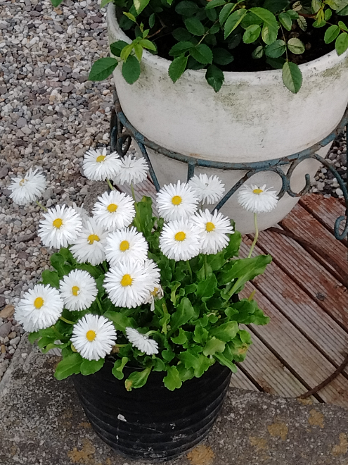 この花は何という名前ですか?