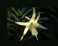 この花の名前を知りたいです。SNSでとても気になってます。