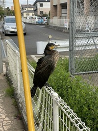 この鳥はなんていう鳥ですか???