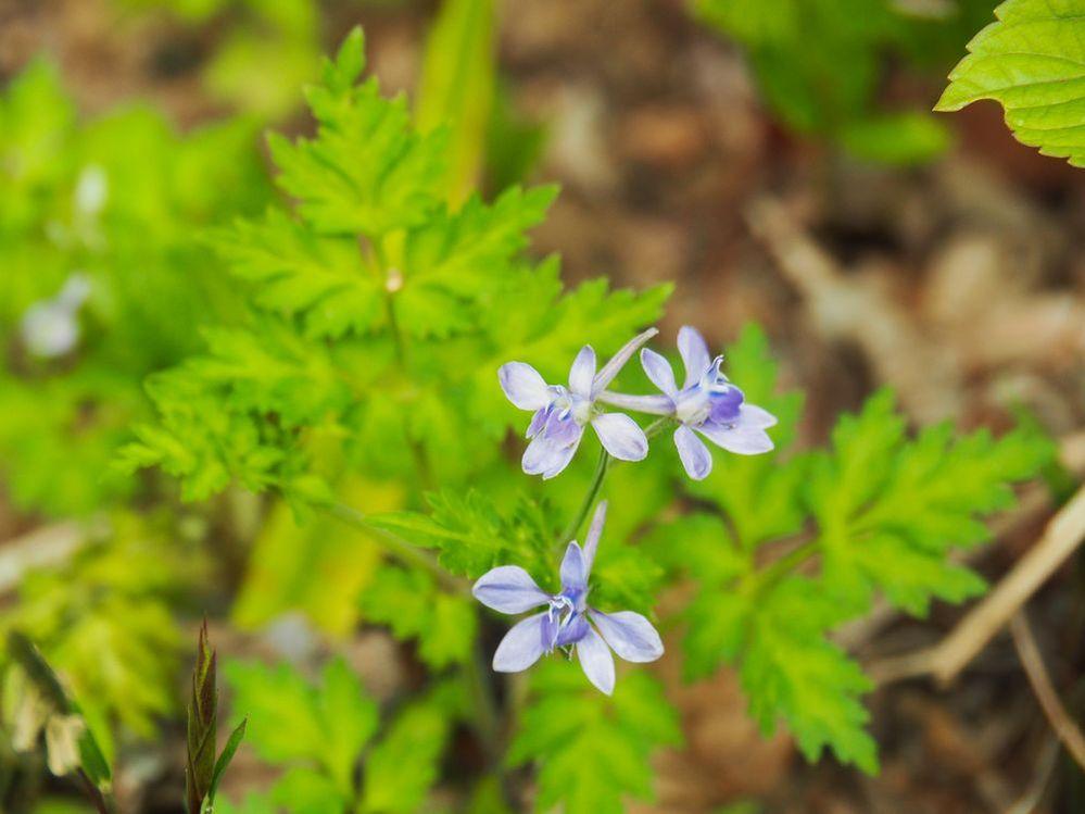 近所の公園で見かけた花です。 名前ご存知の方、教えてください。